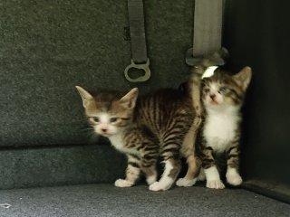 猫と住めるシェアハウス(東京)の詳しい情報イメージ